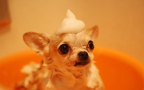 03 Our top skin care tips for your pet